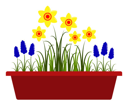 planter: vector spring flowers in planter isolated on white background