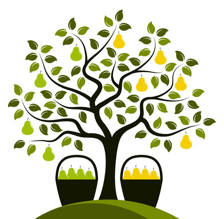 vector twee variëteiten van peer op een boom op een witte achtergrond