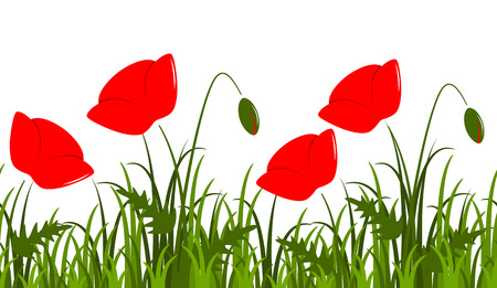 corn poppy: vector seamless border with corn poppy in grass isolated on white background