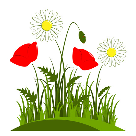 corn poppy: vector corn poppy and daisies in grass isolated on white background Illustration