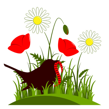 corn poppy: vector corn poppy, daisies and bird with worm isolated on white background Illustration