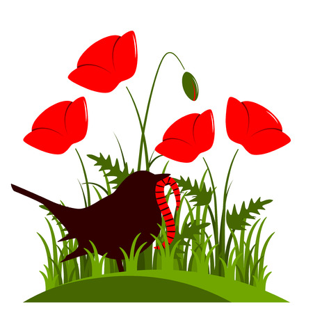 corn poppy: vector corn poppy and bird with worm isolated on white background Illustration
