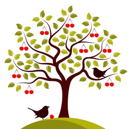 drupe: vector cherry tree and birds isolated on white background Illustration