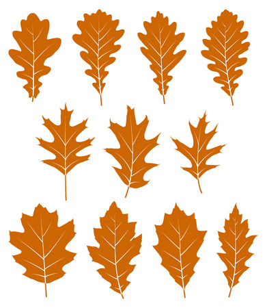 jungle leaves: collection of vector autumn oak leaves isolated on white background Illustration