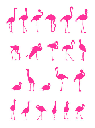 wader: vector pink flamingo silhouettes on white background