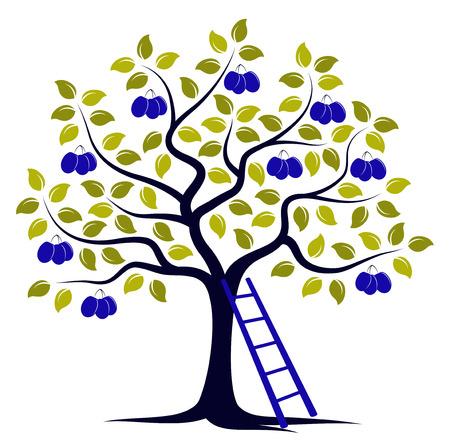 Vektor Pflaumenbaum und Leiter isoliert auf weißem Hintergrund