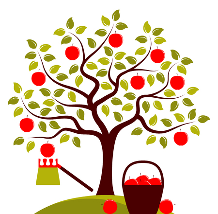 picker: vector apple tree, fruit picker and basket of apples isolated on white background