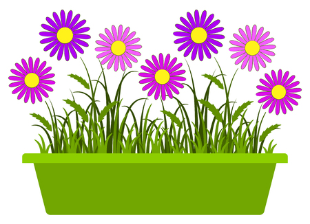 planter: vector pink daisies in planter isolated on white background Illustration