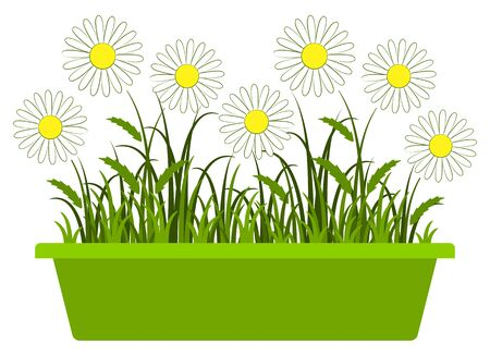planter: vector daisies in planter isolated on white background Illustration