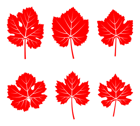 grapevine: collection of vector autumn grapevine leaves isolated on white background