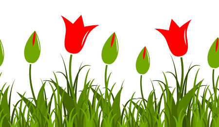 tulips in green grass: seamless vector tulips border isolated on white background