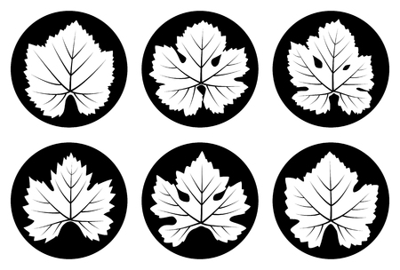 grapevine: collection of vector grapevine leaves isolated on black round Illustration