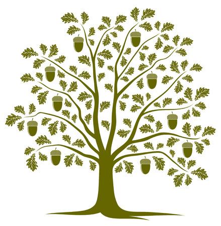 tree isolated: vector oak tree isolated on white background Illustration