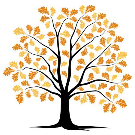 oak tree isolated: vector autumn oak tree isolated on white background Illustration