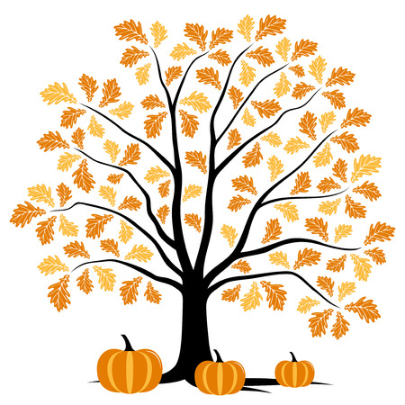 vector autumn oak tree and pumpkins isolated on white background