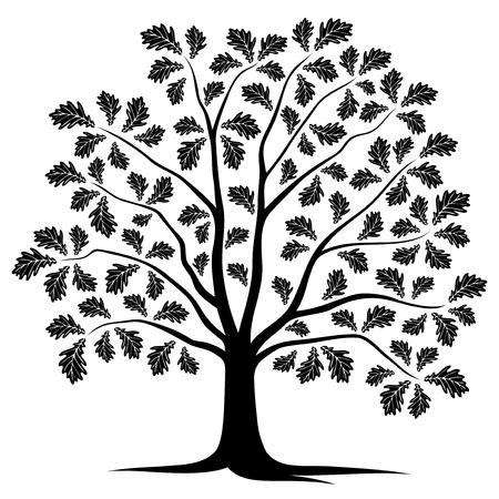 oak tree isolated: vector oak tree isolated on white background Illustration