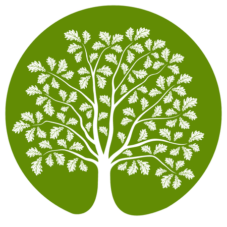oak tree isolated: vector oak tree isolated on green round