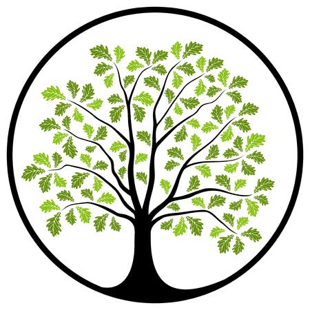 arbol roble: vector árbol de roble en la ronda aislado sobre fondo blanco