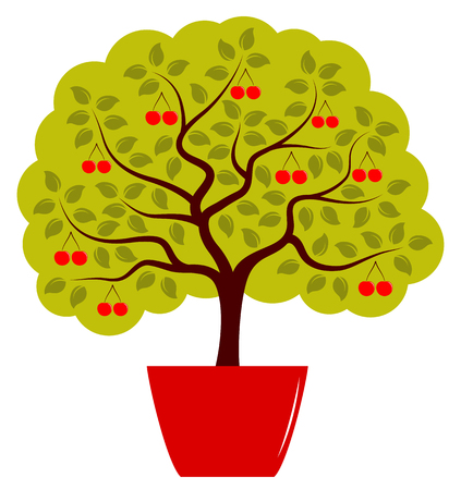 planter: vector cherry tree in pot isolated on white background