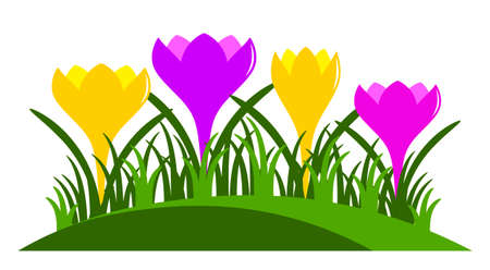 clump: vector clump of crocuses isolated on white background