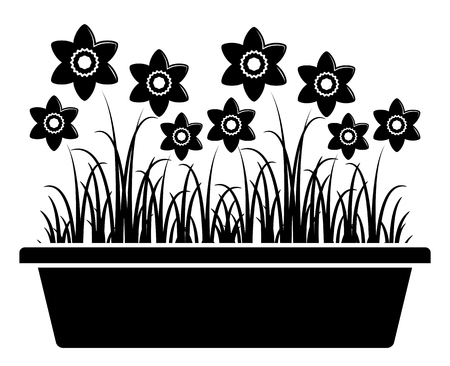 planter: vector daffodils in planter isolated on white background