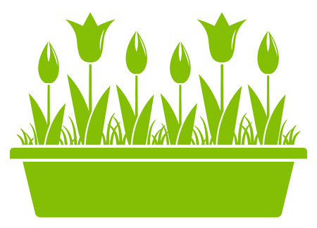 planter: vector tulips in planter isolated on white background