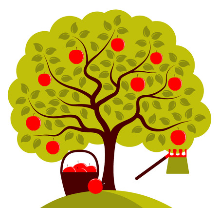 fruit tree: vector apple tree with basket of apples and fruit picker isolated on white background
