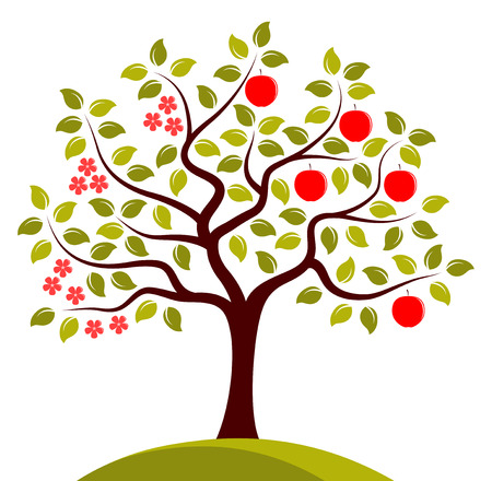 tree isolated: vector apple tree in two seasons isolated on white background