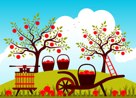 apple orchard: vector hand barrow with basket of apples and fruit press in apple orchard