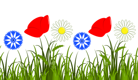 corn poppy: vector seamless border with daisies, corn poppy and cornflowers in grass isolated on white background