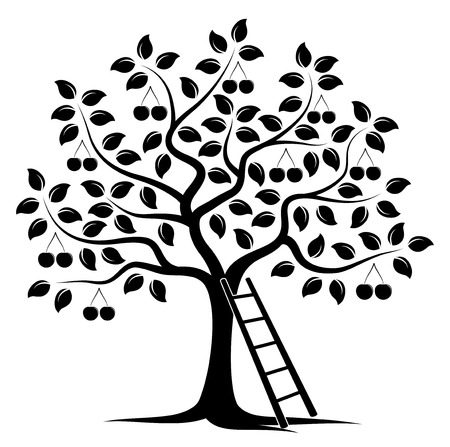 drupe: vector cherry tree and ladder isolated on white background