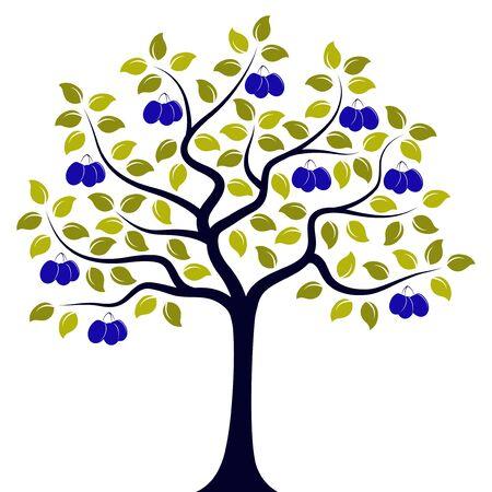 Vektor Pflaumenbaum isoliert auf weißem Hintergrund