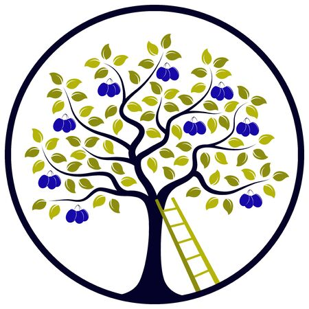 drupe: vector plum tree and ladder in round isolated on white background Illustration