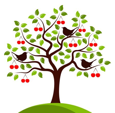 tree isolated: cherry tree and birds isolated on white background