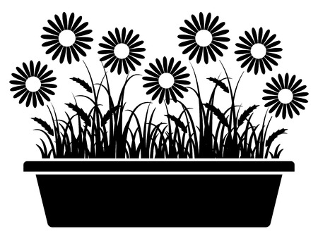 planter: daisies in planter isolated on white background