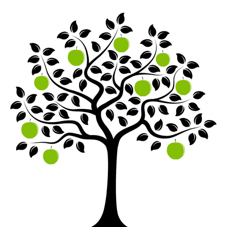 tree isolated: apple tree isolated on white background