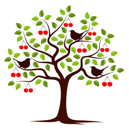 vector árbol de cerezo y las aves aisladas sobre fondo blanco