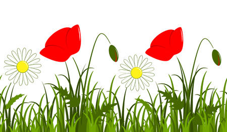 vector seamless border with daisies and corn poppy in grass isolated on white background Illustration