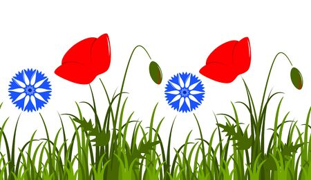vector seamless border with corn poppy and cornflowers in grass isolated on white background