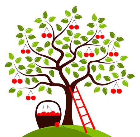 vector cherry tree, ladder and basket of cherries isolated on white background Stock Illustratie