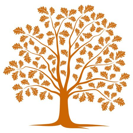 autumn tree: autumn oak tree isolated on white background