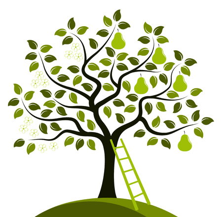 vector pear tree in two seasons and ladder isolated on white background