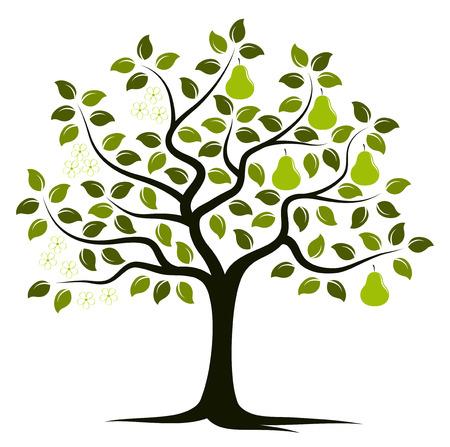 vector perenboom in twee seizoenen geïsoleerd op witte achtergrond