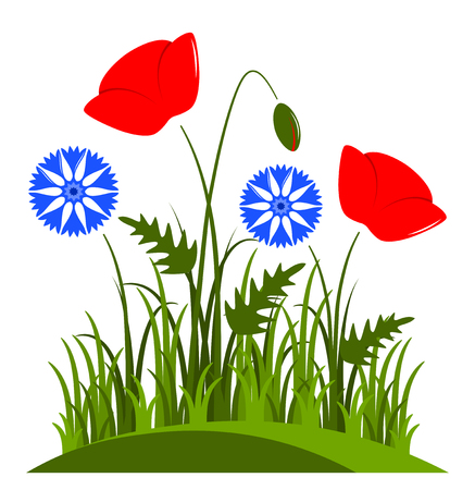 tuft: vector corn poppies and cornflowers in grass isolated on white background