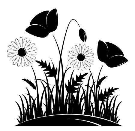 Papaveri di mais e margherite in erba.