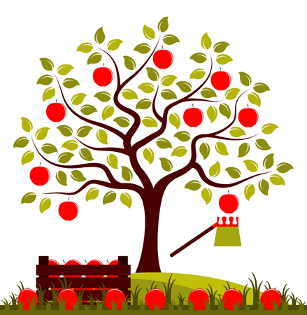 vector apple tree, wooden crate of apples and fruit picker isolated on white background