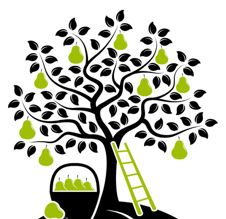 vector pear tree, ladder and basket of pears isolated on white background Illustration