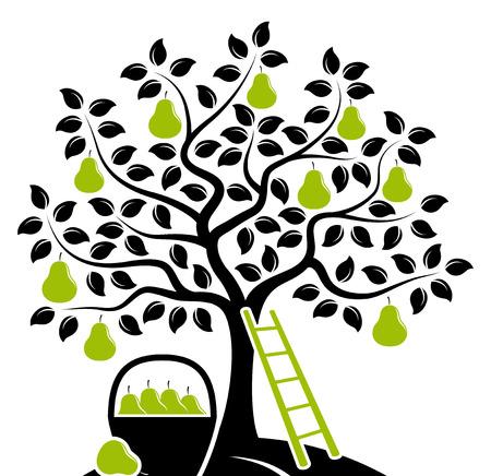 vector perenboom, ladder en mand met peren geïsoleerd op een witte achtergrond
