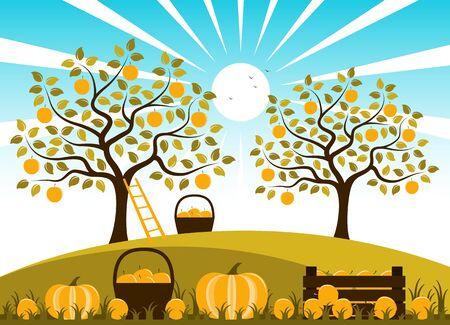 Caisse en bois de fruits et citrouilles dans le jardin d'automne. Banque d'images - 85612368