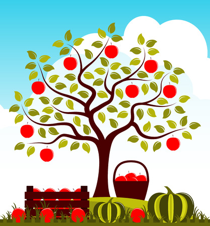 Caisse en bois de pommes et de citrouilles dans le jardin d'automne. Banque d'images - 85660109